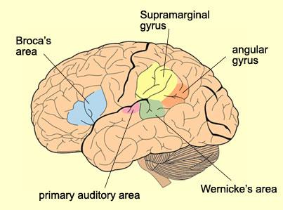 Nyelvtanulással az Alzheimer ellen