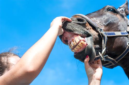 Közmondások néhány nyelven - ajándék lónak ne nézd a fogát